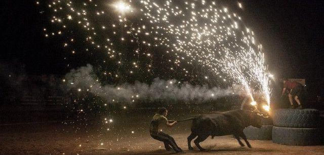 En Cataluña se prohibieron las corridas de toros en el 2012, pero se mantuvieron los 'correbous', que se celebran en las Terres de l'Ebre / Foto: Kike Carbajal - Santa Fiesta