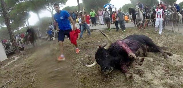 Durante el Toro de la Vega de este año, el astado, llamado Rompesuelas, fue alanceado hasta la muerte durante 20 minutos / Foto: ProVegan - PACMA