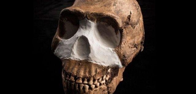 Cráneo de 'Homo naledi', hallado en el sistema de cuevas Rising Star de Sudáfrica  / Foto:  John Hawks - Wits University