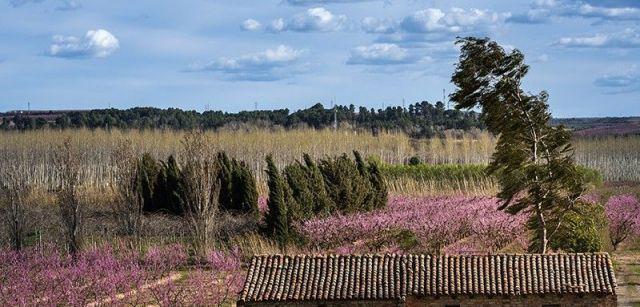 El viento azota un campo de frutales a orillas del río Segre en Aitona (Lleida) / Foto: Josep Cano