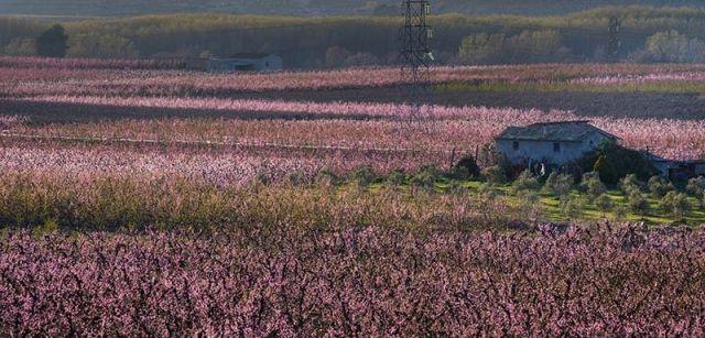 La zona del curso bajo del Segre concentra un tercio de la producción española de fruta de hueso / Foto: Josep Cano
