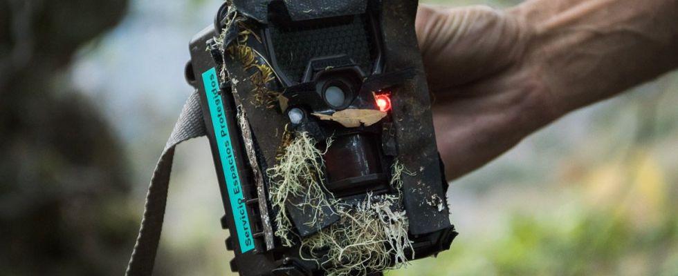 Una de las 'cámaras trampa' que se ocultan en los bosques para controlar a los animales / Foto: Roger Rovira