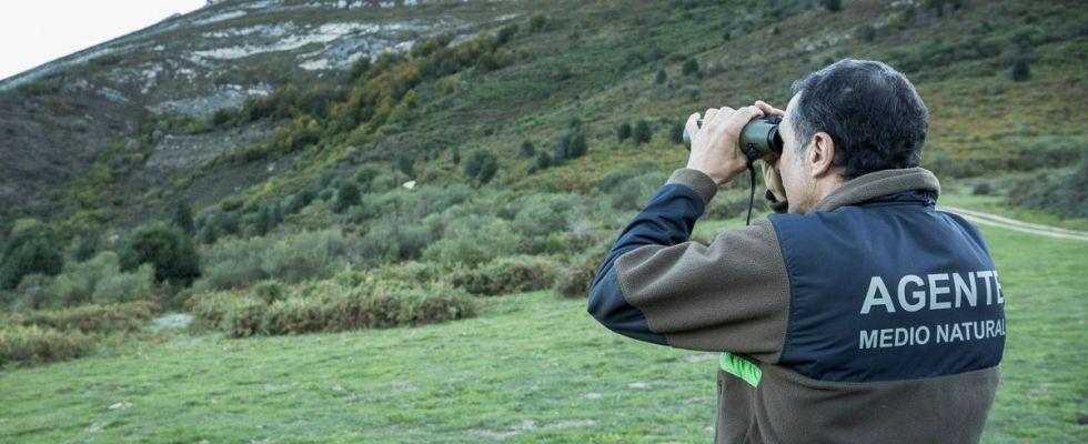 El guarda de la Patrulla Oso tratando de localizar algún ejemplar con sus prismáticos / Foto: Roger Rovira