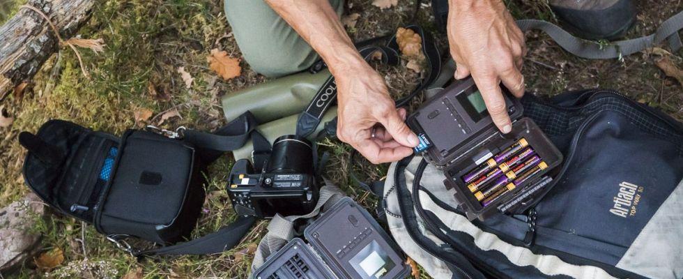 Cambio de baterías y tarjeta de memoria de una de las 'cámaras trampa' oculta en el tronco de un árbol / Foto: Roger Rovira