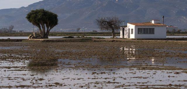Arrozales todavía inundados a varios kilómetros del mar cuatro días después de la tempestad. En esta época del año deberían estar secos / Foto: Josep Cano