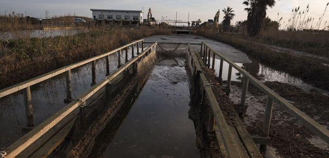 Canal de desagüe de los arrozales obstruido por la arena en las proximidades de la playa de la Marquesa / Foto: Josep Cano