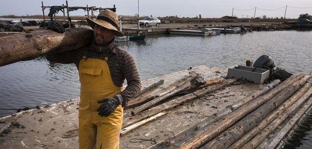Trabajadores de una mejillonera destruída descargando postes recuperados de las aguas en el Port d'Illa de Mar / Foto: Josep Cano