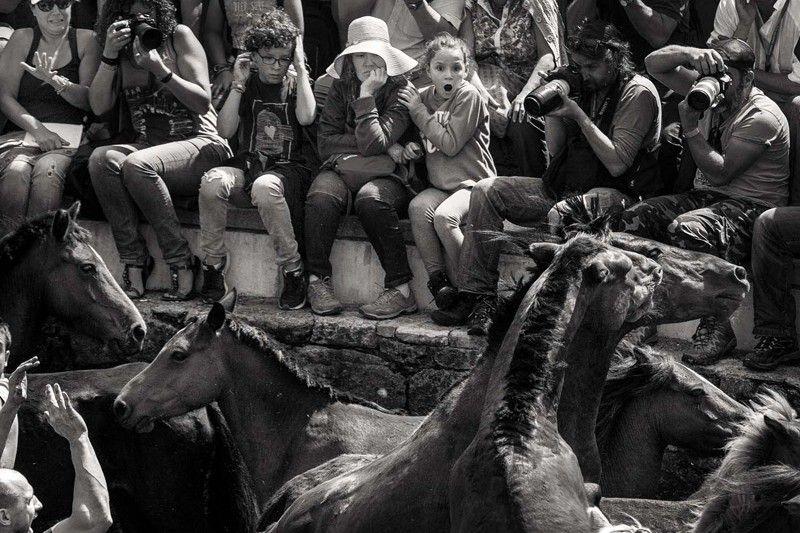 Los caballos se hacinan en el corral a los pies de público. Con ello se impide que puedan cocear a los 'aloitadores' / Foto: Javier Arcenillas